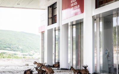 Kosovo: vita da capre