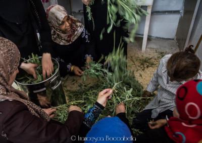 Reportage Palestina-113